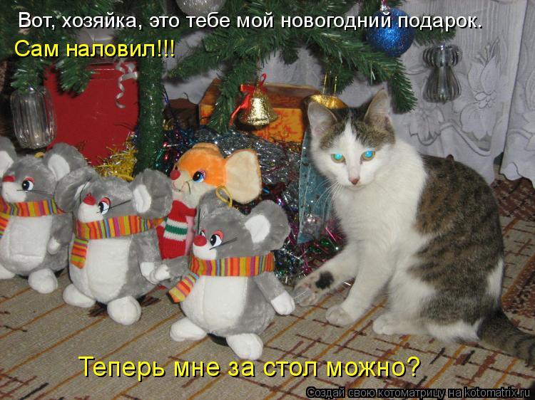 Котоматрица: Вот, хозяйка, это тебе мой новогодний подарок. Теперь мне за стол можно? Сам наловил!!!