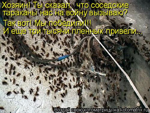 Котоматрица: Хозяин! Ты сказал,  что соседские  тараканы нас на войну вызываю? Так вот! Мы победили!!!  И еще три тысячи пленных привели...