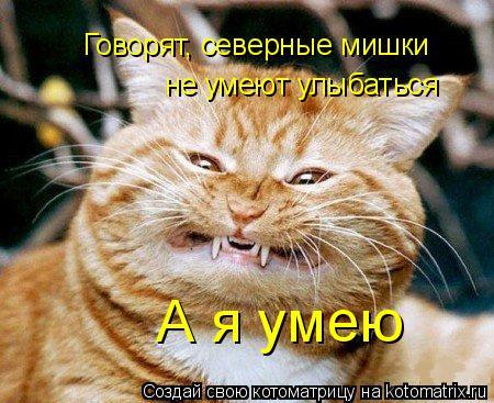 Котоматрица: А я умею Говорят, северные мишки не умеют улыбаться