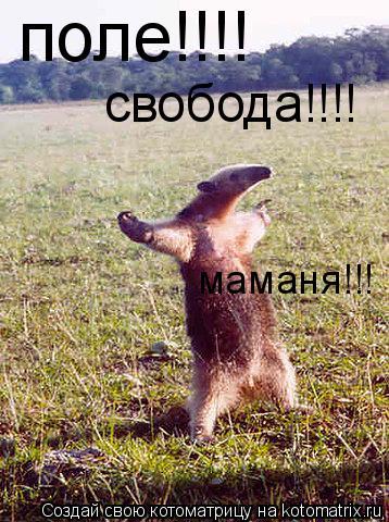 Котоматрица: поле!!!! свобода!!!! маманя!!!