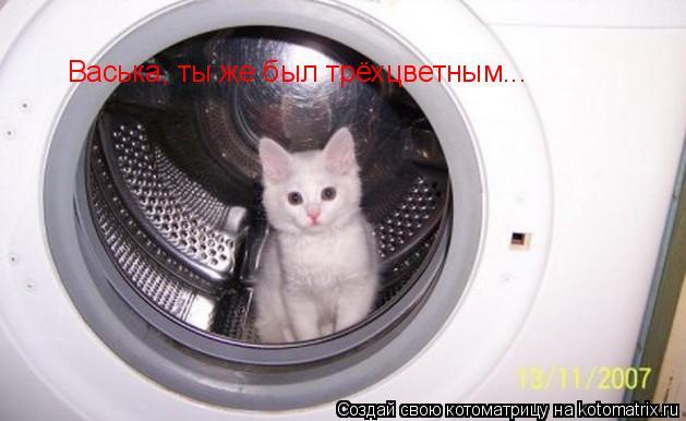 Котоматрица: Васька, ты же был трёхцветным...
