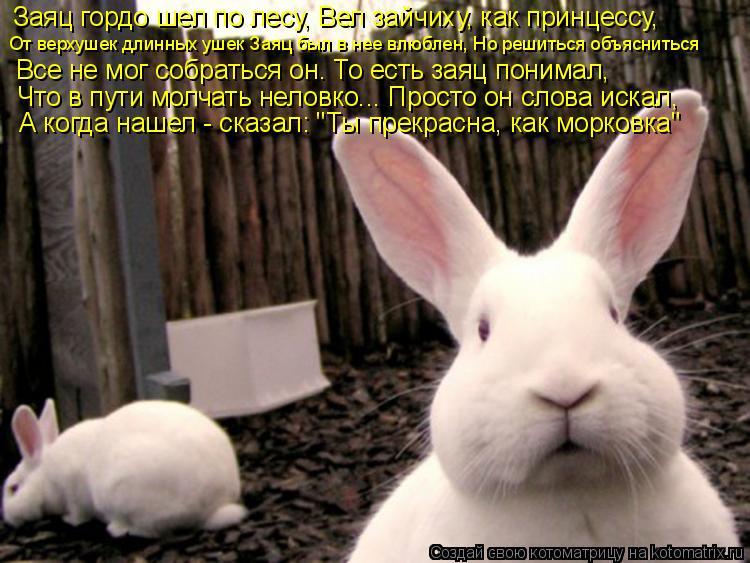 Котоматрица: Заяц гордо шел по лесу, Вел зайчиху, как принцессу,  От верхушек длинных ушек Заяц был в нее влюблен, Но решиться объясниться Все не мог собра