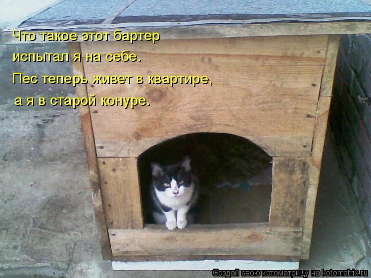 Котоматрица: Что такое этот бартер испытал я на себе. Пес теперь живет в квартире, а я в старой конуре.