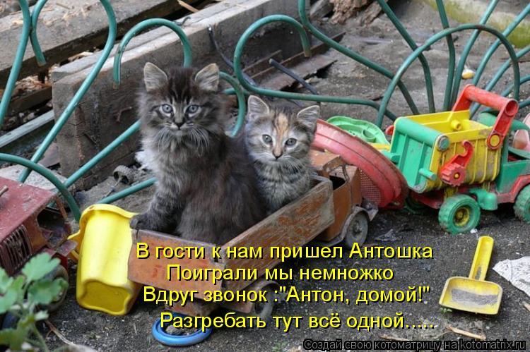 """Котоматрица: В гости к нам пришел Антошка Поиграли мы немножко Вдруг звонок :""""Антон, домой!"""" Разгребать тут всё одной....."""