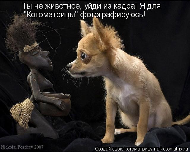 """Котоматрица: Ты не животное, уйди из кадра! Я для  """"Котоматрицы"""" фотографируюсь!"""