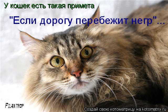 """Котоматрица: У кошек есть такая примета """"Если дорогу перебежит негр""""..."""