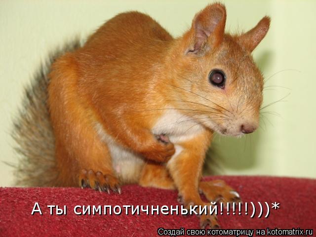 Котоматрица: А ты симпотичненький!!!!!)))*
