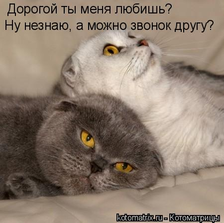 Котоматрица: Дорогой ты меня любишь? Ну незнаю, а можно звонок другу?