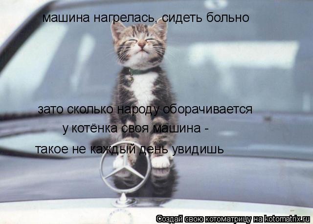 Котоматрица: машина нагрелась, сидеть больно зато сколько народу оборачивается такое не каждый день увидишь у котёнка своя машина -