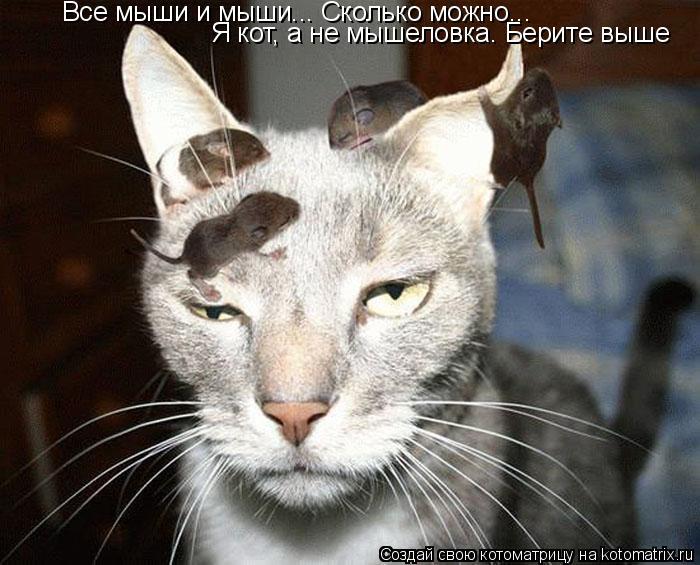 Котоматрица: Все мыши и мыши... Сколько можно... Я кот, а не мышеловка. Берите выше