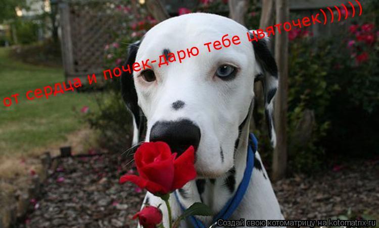Котоматрица: от сердца и почек-дарю тебе цвяточек))))))