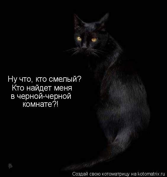 Котоматрица: Ну что, кто смелый?  Кто найдет меня в черной-черной комнате?!