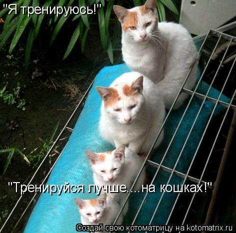 """Котоматрица: """"Я тренируюсь!"""" """"Тренируйся лучше....на кошках!"""""""