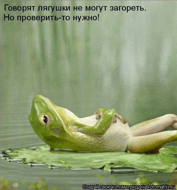 Котоматрица: Говорят лягушки не могут загореть. Но проверить-то нужно!