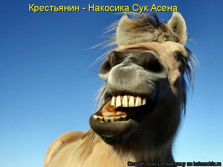 Котоматрица: Крестьянин - Накосика Сук Асена