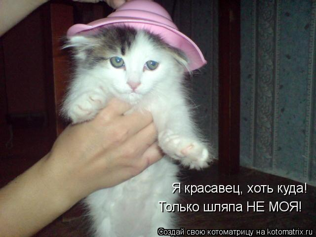 Котоматрица: Я красавец, хоть куда! Только шляпа НЕ МОЯ!