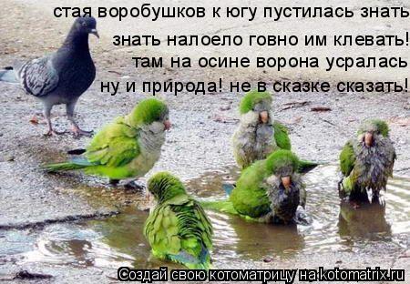 Котоматрица: стая воробушков к югу пустилась знать надоело говно им клевать!!! там на осие ворона усралась, нк и природа не в сказке сказать  знать налоел