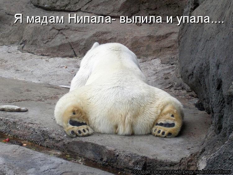 Котоматрица: Я мадам Нипала- выпила и упала....