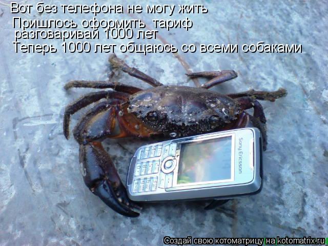 Котоматрица: Вот без телефона не могу жить Пришлось оформить  тариф  разговаривай 1000 лет Теперь 1000 лет общаюсь со всеми собаками