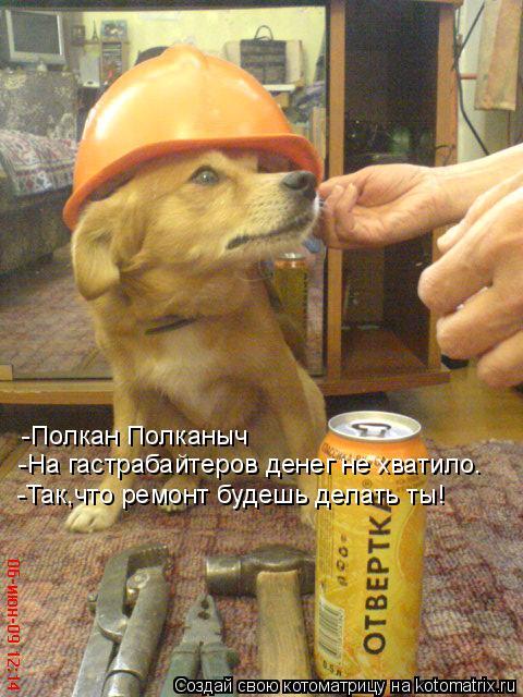 Котоматрица: -Полкан Полканыч  -На гастрабайтеров денег не хватило. -Так,что ремонт будешь делать ты!