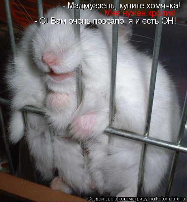 Котоматрица: - Мадмуазель, купите хомячка! - Мне нужен кролик! - О! Вам очень повезло, я и есть ОН!