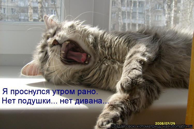 Котоматрица: Я проснулся утром рано. Нет подушки... нет дивана...