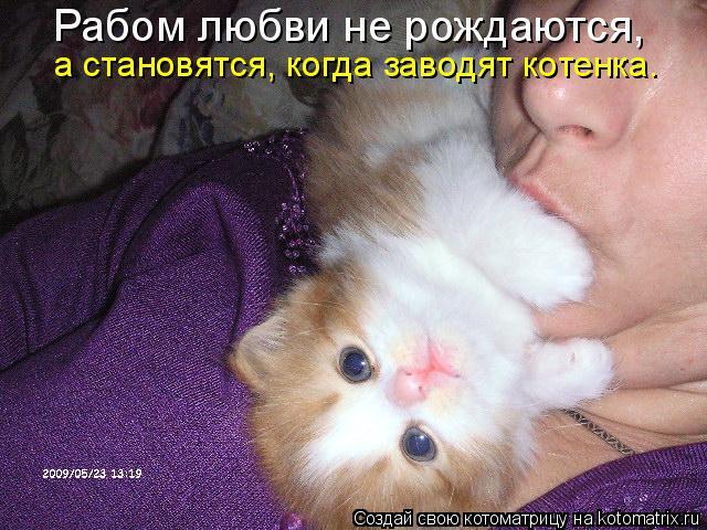 Котоматрица: Рабом любви не рождаются,  а становятся, когда заводят котенка.