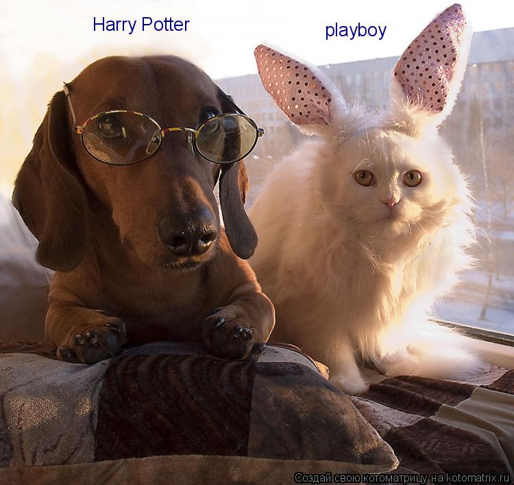 Котоматрица: Harry Potter  playboy