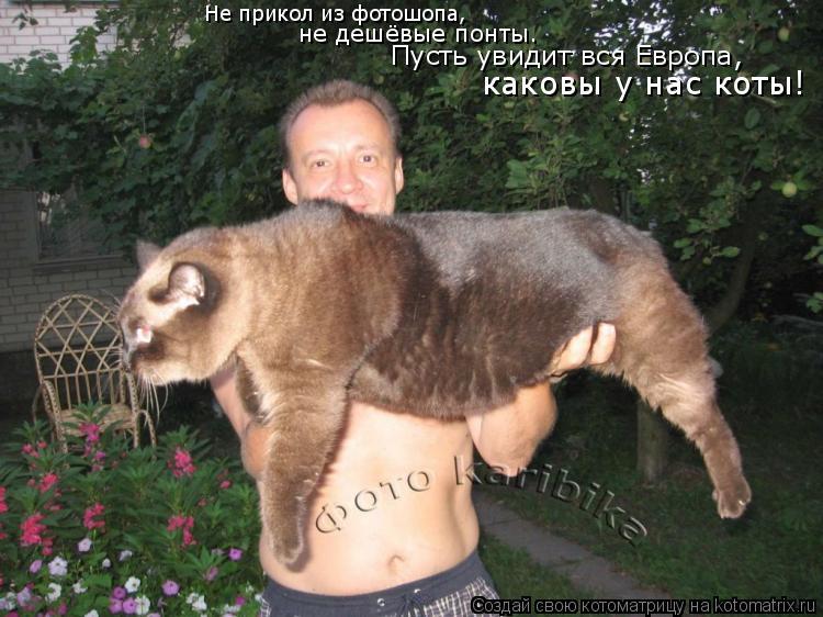 Котоматрица: Не прикол из фотошопа, не дешёвые понты. Пусть увидит вся Европа, каковы у нас коты!