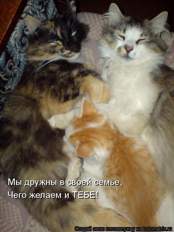 Котоматрица: Мы дружны в своей семье, Чего желаем и ТЕБЕ!