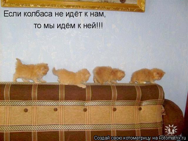 Котоматрица: Если колбаса не идёт к нам, то мы идём к ней!!!