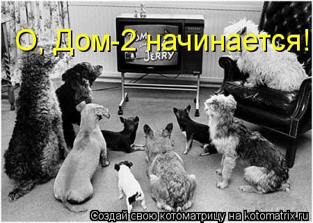 Котоматрица: О, Дом-2 начинается!