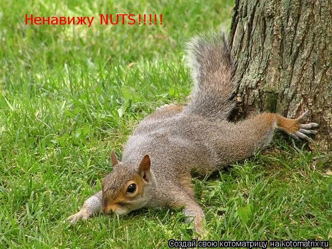 Котоматрица: Ненавижу NUTS!!!!!