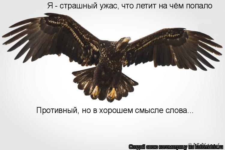 Котоматрица: Я - страшный ужас, что летит на чём попало Противный, но в хорошем смысле слова...