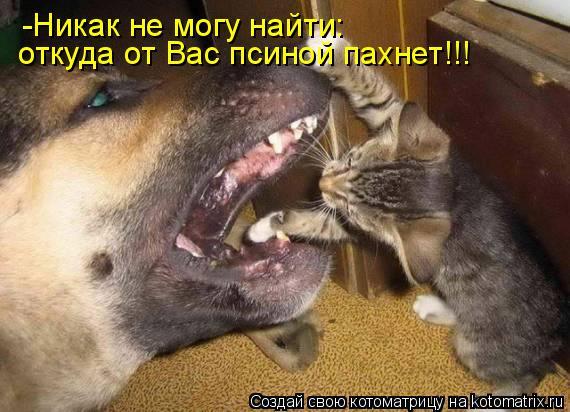 Котоматрица: -Никак не могу найти: откуда от Вас псиной пахнет!!!