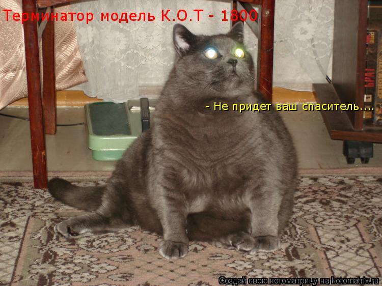 Котоматрица: Терминатор модель К.О.Т - 1800 - Не придет ваш спаситель....