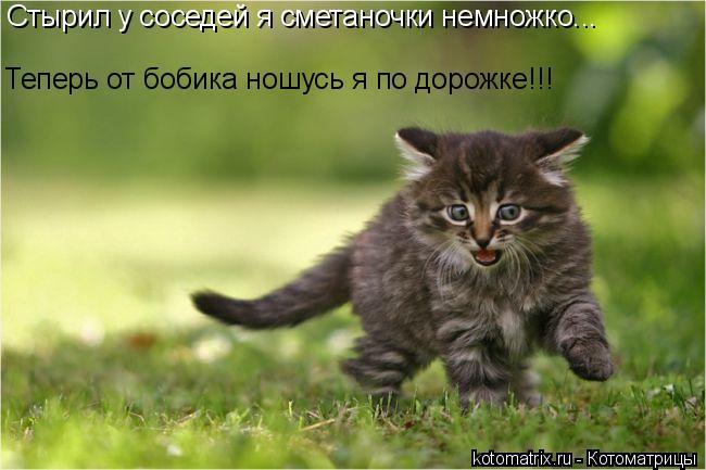 Котоматрица: Стырил у соседей я сметаночки немножко... Теперь от бобика ношусь я по дорожке!!!