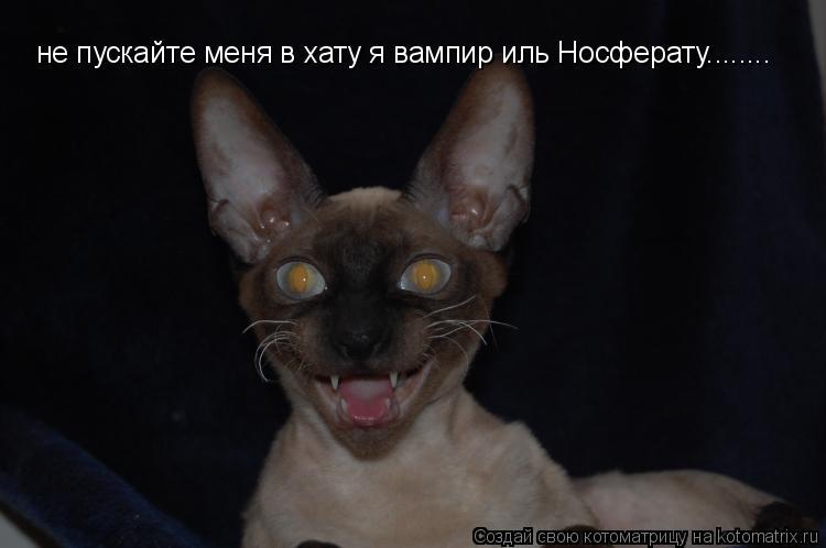 Котоматрица: не пускайте меня в хату я вампир иль Носферату........