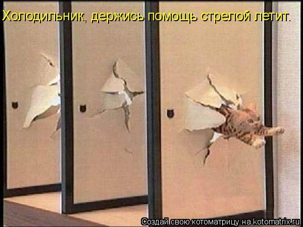 Котоматрица: Холодильник, держись помощь стрелой летит.