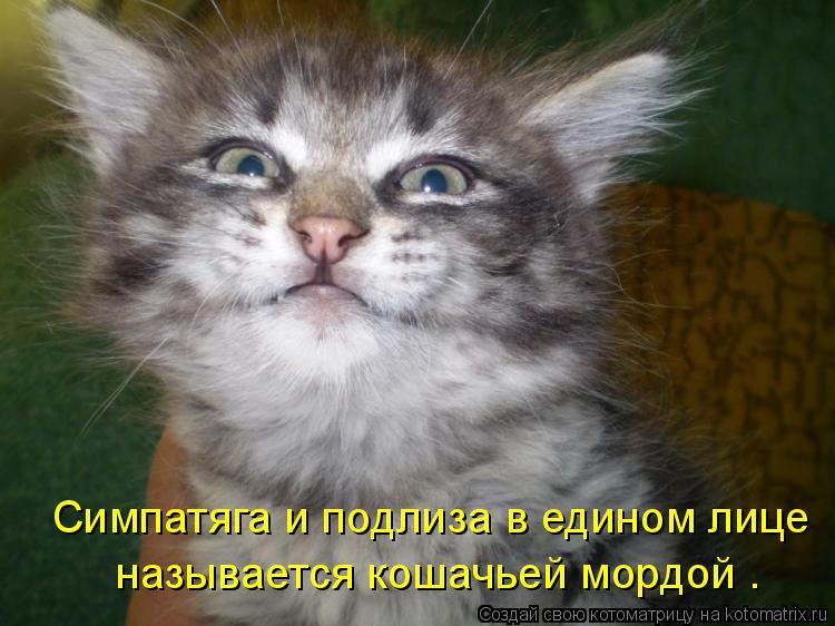 Котоматрица: Симпатяга и подлиза в едином лице  называется кошачьей мордой .
