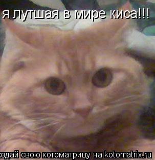 Котоматрица: я лутшая в мире киса!!!