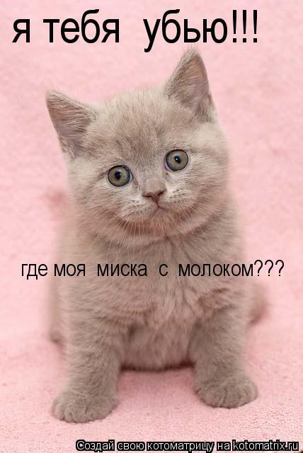 Котоматрица: я тебя  убью!!! где моя  миска  с  молоком???