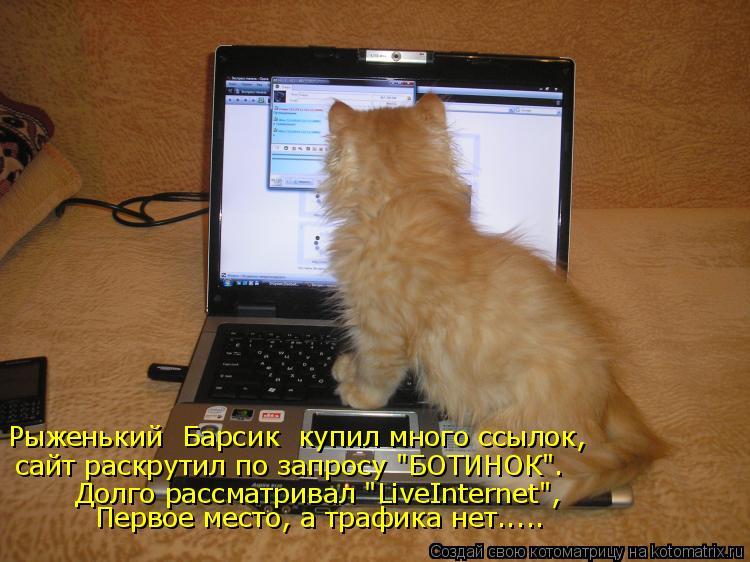 """Котоматрица: Рыженький  Барсик  купил много ссылок, сайт раскрутил по запросу """"БОТИНОК"""". Долго рассматривал """"LiveInternet"""", Первое место, а трафика нет....."""