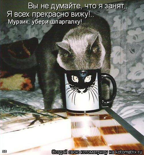 Котоматрица: Вы не думайте, что я занят.. Я всех прекрасно вижу!.. Мурзик, убери шпаргалку!