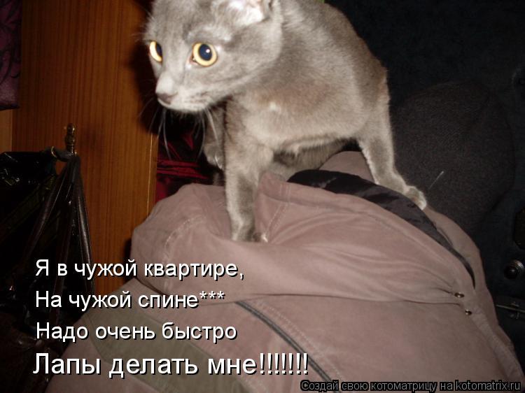 Котоматрица: Я в чужой квартире, На чужой спине*** Надо очень быстро Лапы делать мне!!!!!!!