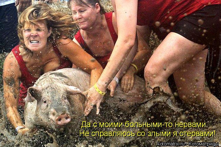 Котоматрица: Да с моими больными-то нервами Не справляюсь со злыми я стервами!
