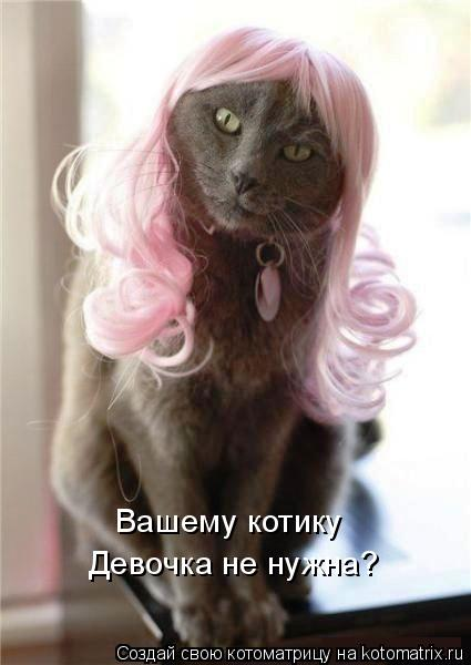 Котоматрица: Вашему котику  Девочка не нужна?