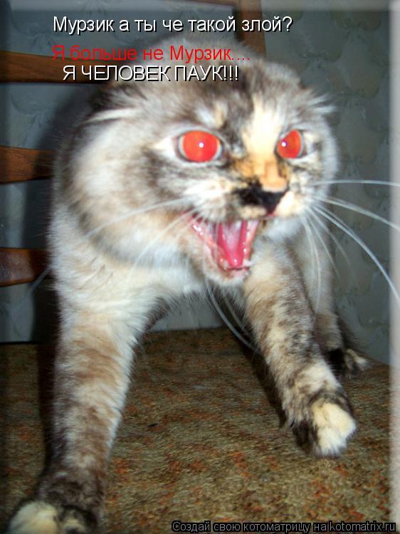 Котоматрица: Мурзик а ты че такой злой? Я больше не Мурзик.... Я ЧЕЛОВЕК ПАУК!!!