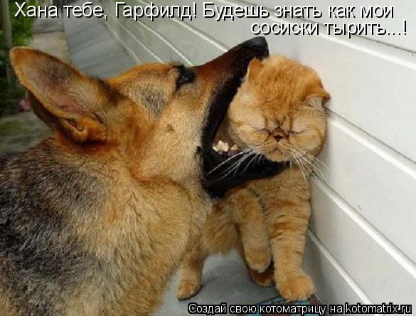 Котоматрица: Хана тебе, Гарфилд! Будешь знать как мои сосиски тырить...!