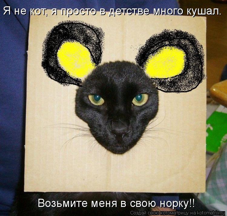 Котоматрица: Я не кот, я просто в детстве много кушал. Возьмите меня в свою норку!!